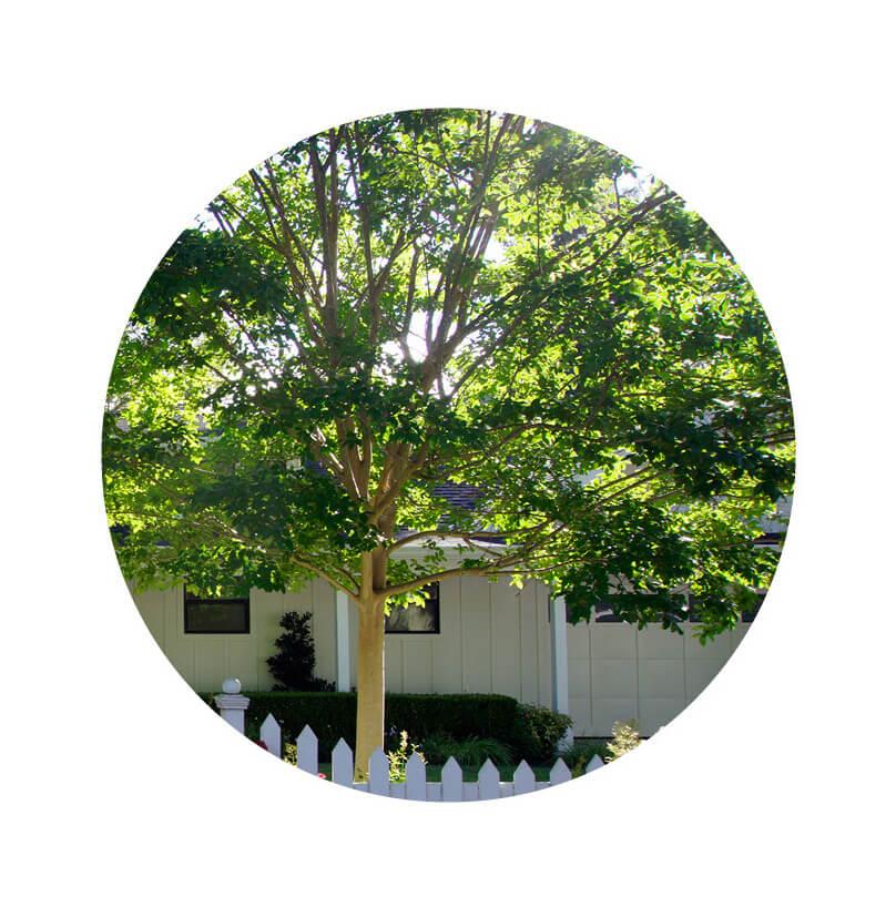 YardKit-Maintenance-Guide-Image-Tree.jpg