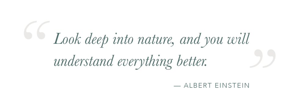 Einstein-Quote-Nature.png