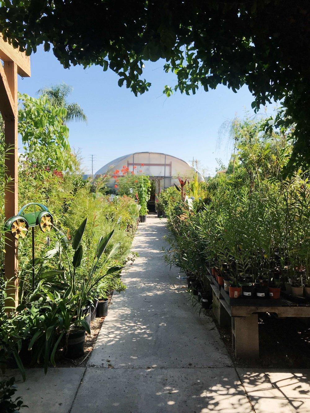 plant-nursery-aisle.JPG