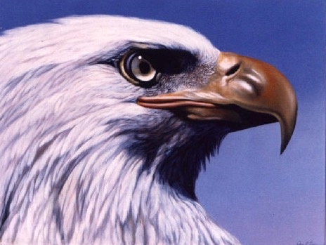 Eagle Portrait by Jennifer Chapman