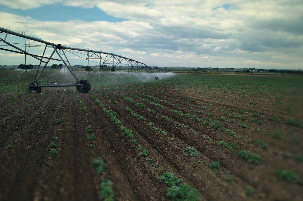 hemp-farm-2.jpg