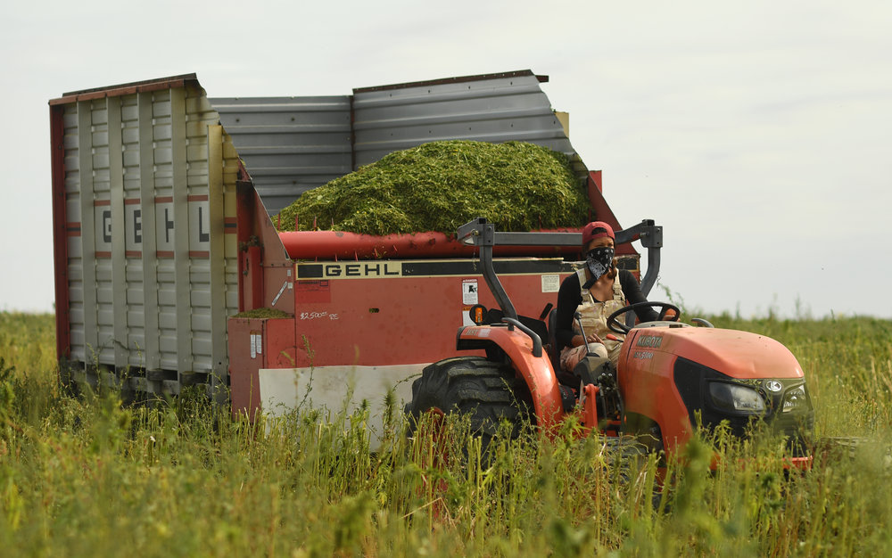 ORGANIC FARMING PRACTICES - Colorado Cultivars has industrial hemp farms around the state of Colorado and currently have approximately over 1,500 acres under cultivation. Our original farm is located in Eaton, Colorado. We use organic farming practices in order to ensure the highest quality, domestically grown hemp products.