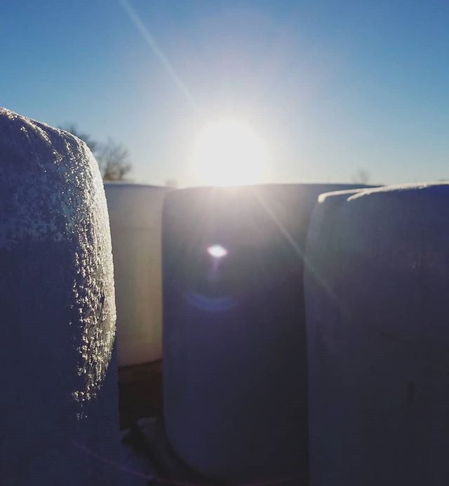 Crisp, early mornings! #frost #hempbales #hempfarm #coolcoloradomorning #sunrise #earlymornings #farmlife