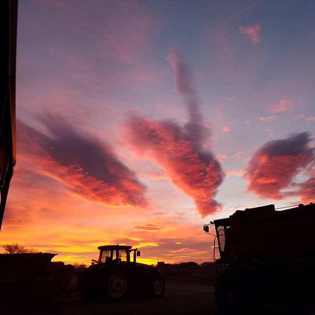 A beautiful sunrise, moving buildings and our C.C.C. (Chief Cat in Charge) is here for a visit. Busy day, big changes! #farmlife #trappythekitty #hemp #coloradoskies #sunrise #movingday #telehandler  #andsoitbegins #getitbrian #kittyofthecorn #earlymornings