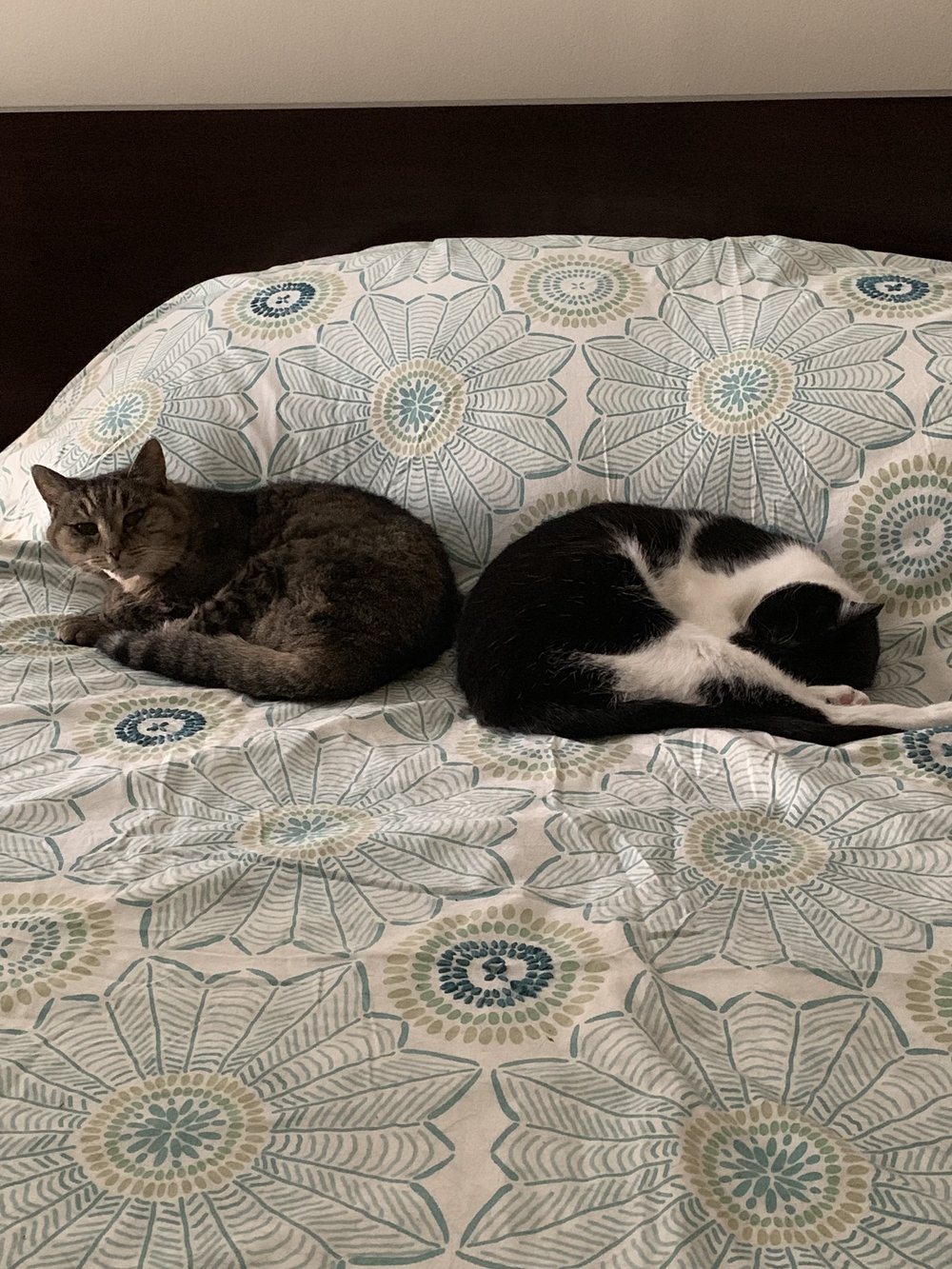 Two cats - Lefty named Stormy (who caught me taking this). Beside Tiny who looks a bit like a prawn right now.