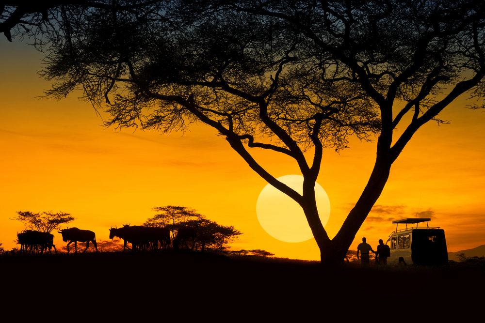 Zanzibar & Tanzania - JuLY 2020Join Our Waiting List