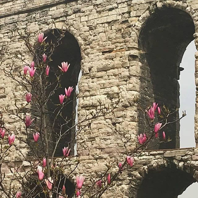 The #jacjourney continues. Today I traveled from #cihangir to #fatih for fabric at İMÇ and back to #gayrettepe. Spring has sprung and I couldn't help but pause to take in the beauty of budding, colorful, new life against the backdrop of antiquity. #istanbul #secondhome #magnolia #aqueduct