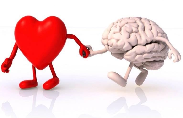 heart-brain 768x557.jpg
