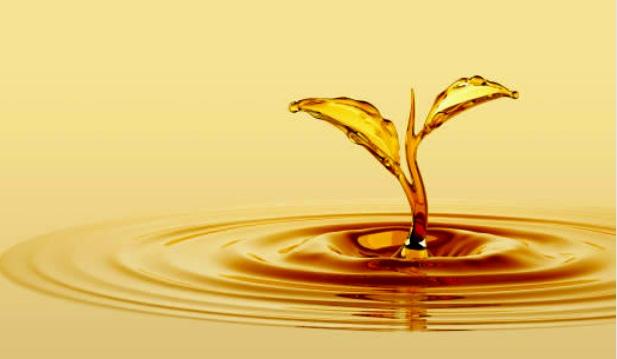 oilplant.jpg