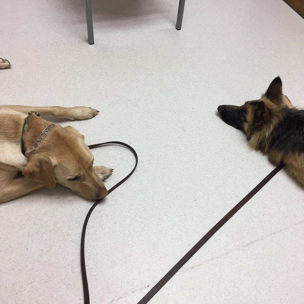 Clutch and Asscher-relaxing at the vet