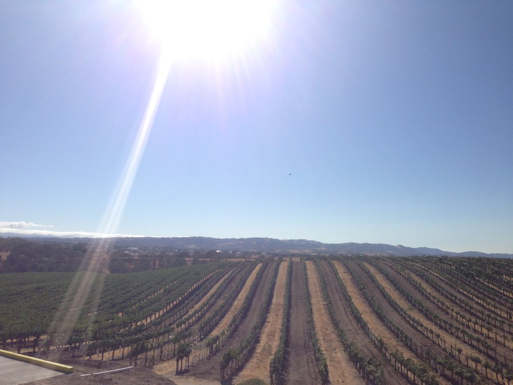 eberle-vineyards-paso-robles.jpg
