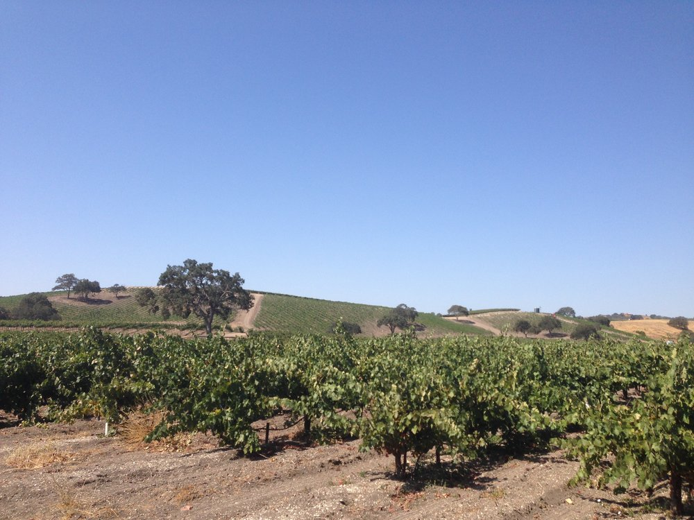 bush-vines-paso-robles.jpg