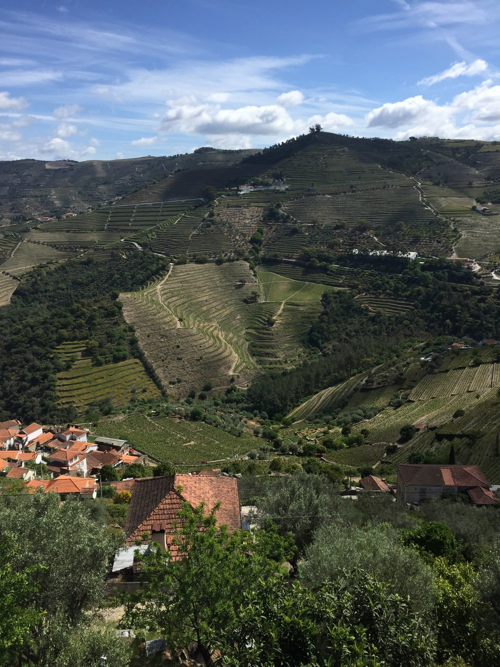 steep vineyards leading up to Quinta do Noval, one of the legendary port producers