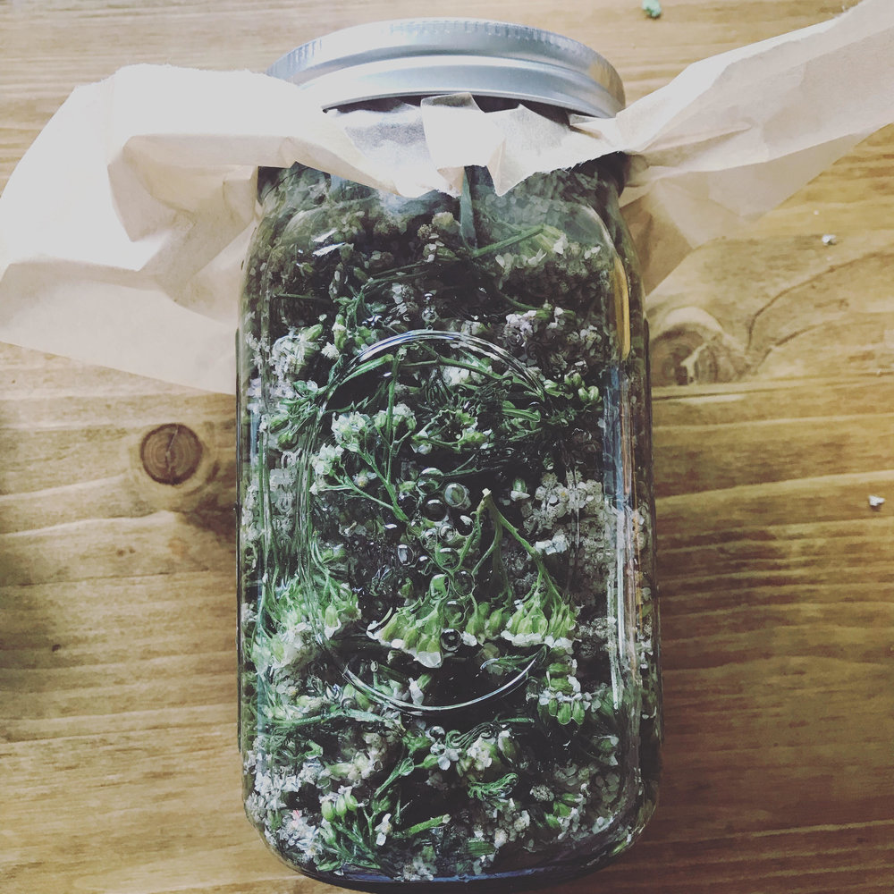 yarrow tincture  - it supports us with: internal and external bleeding, diarrhea, reducing fevers, and inflammation.$10 per 1 oz bottle$20 per 2 oz bottle
