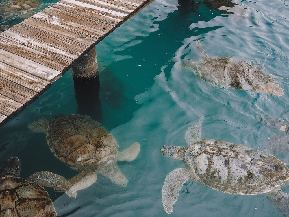 The Cayman Islands and Grand Cayman are both the perfect solution for a relaxing beach vacation. But if sand and tropical drinks aren't you're thing, there are also countless activities like swimming with stingrays, holding turtles and snorkeling! #caymanislands #grandcayman #beach #travel