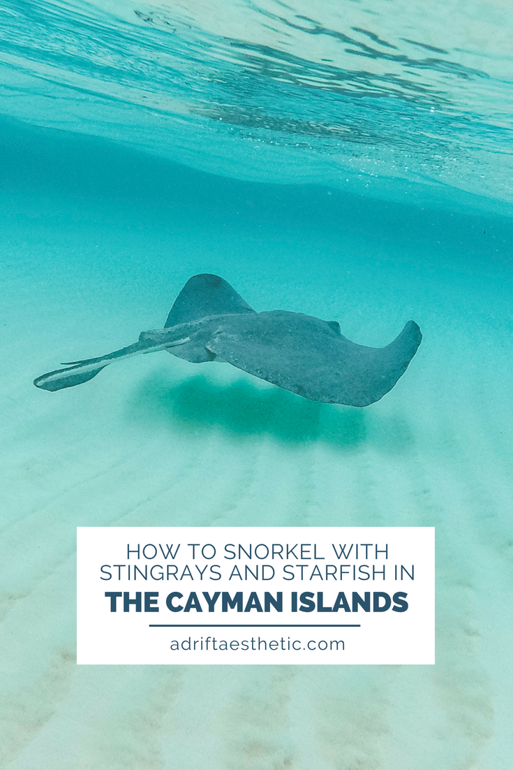Stingray City is the most amazing excursion you'll take in the Cayman Islands. Spend the day in the middle of the ocean with wild stingrays, starfish and snorkeling in a coral reef. #grandcayman #caymansialnds #stingraycity #snorkel