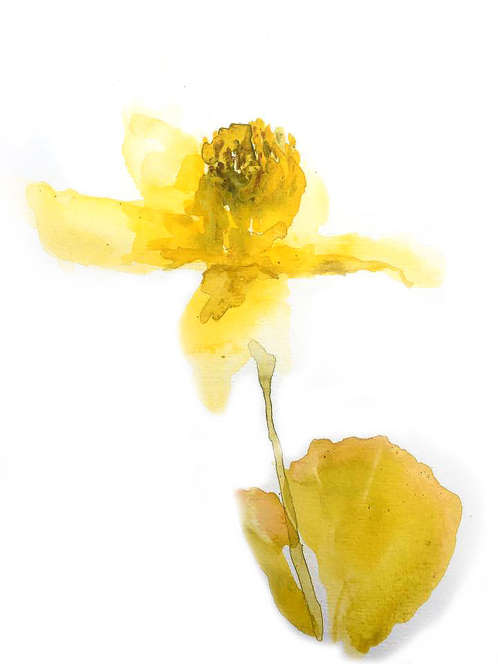 yellow flora.jpg