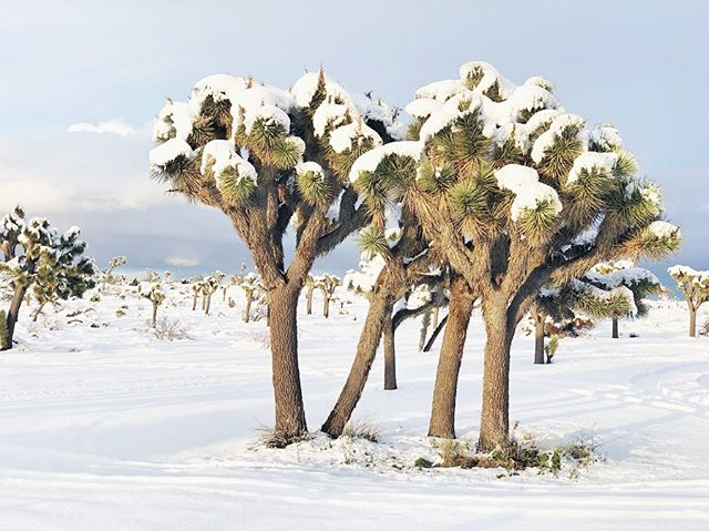 First time this desert kid has experienced snow! #desertkid #designer #simplepleasures #designlife #livecolorfully