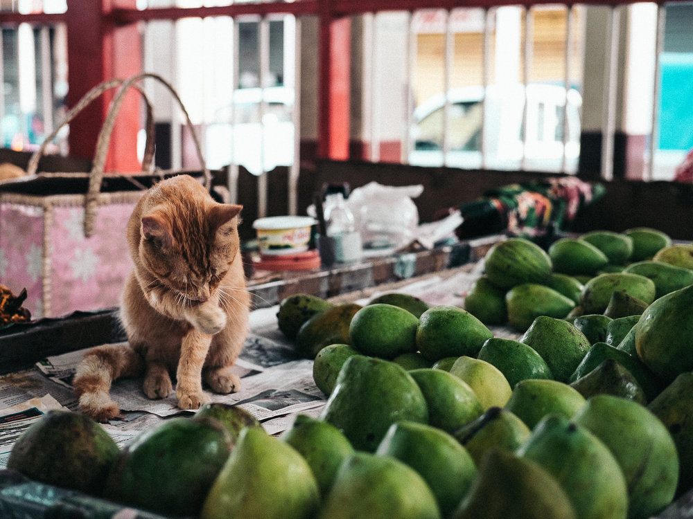 Cat. Papeete, Tahiti, French Polynesia