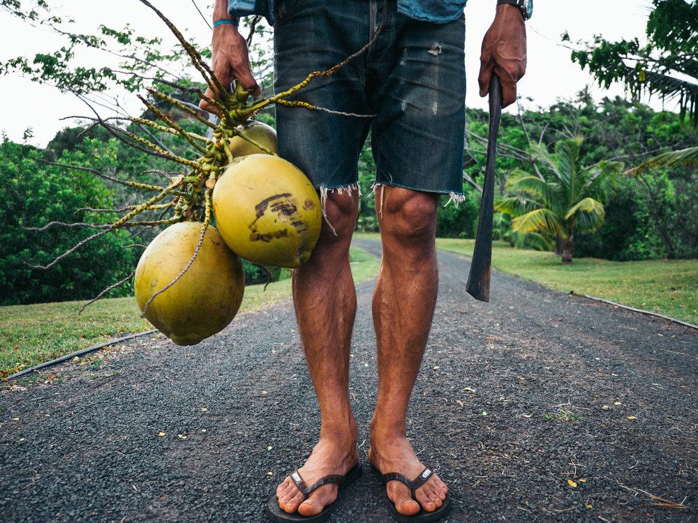 Coconuts. Kauai, Hawaii