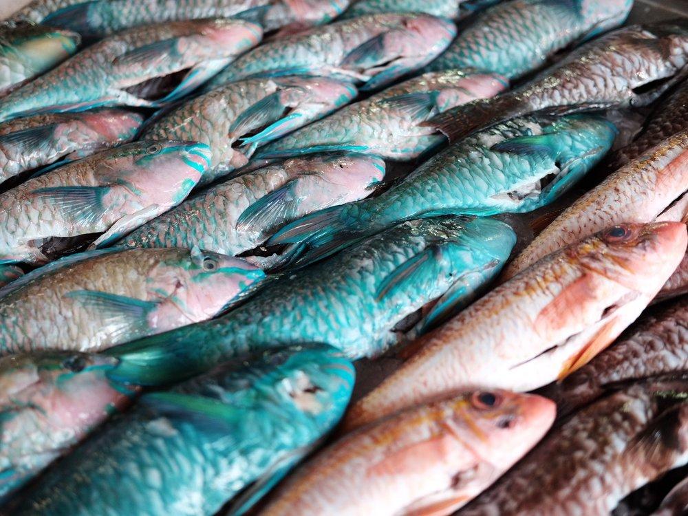 Parrot Fish. Papeete Market, Tahiti, French Polynesia