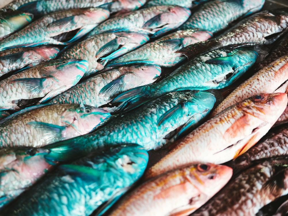 Parrot_Fish-Tahiti-Cookwilltravel.jpg