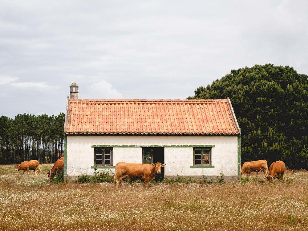 Cookwilltravel - Vila do Bispo  > Lisboa - 6.8 - DSCF3235-Edit.jpg