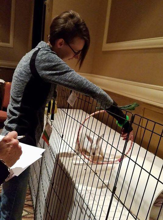 Training rabbits at APDT conference