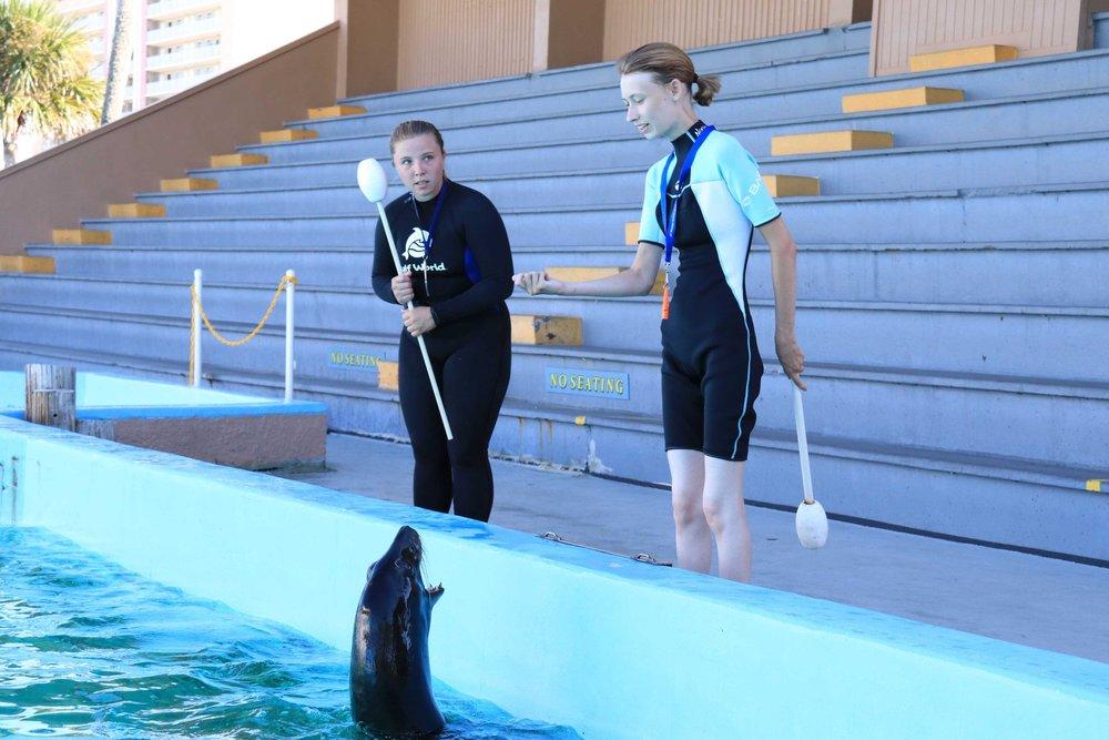 Training Sea Lions at Gulf World