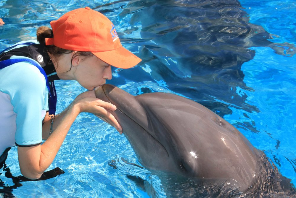 Training Dolphins at Gulf World