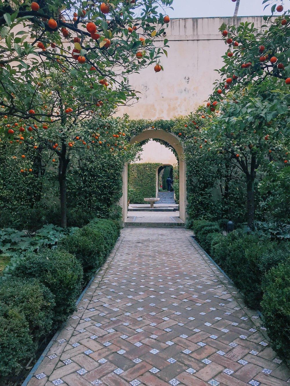 More gardens and orange trees.