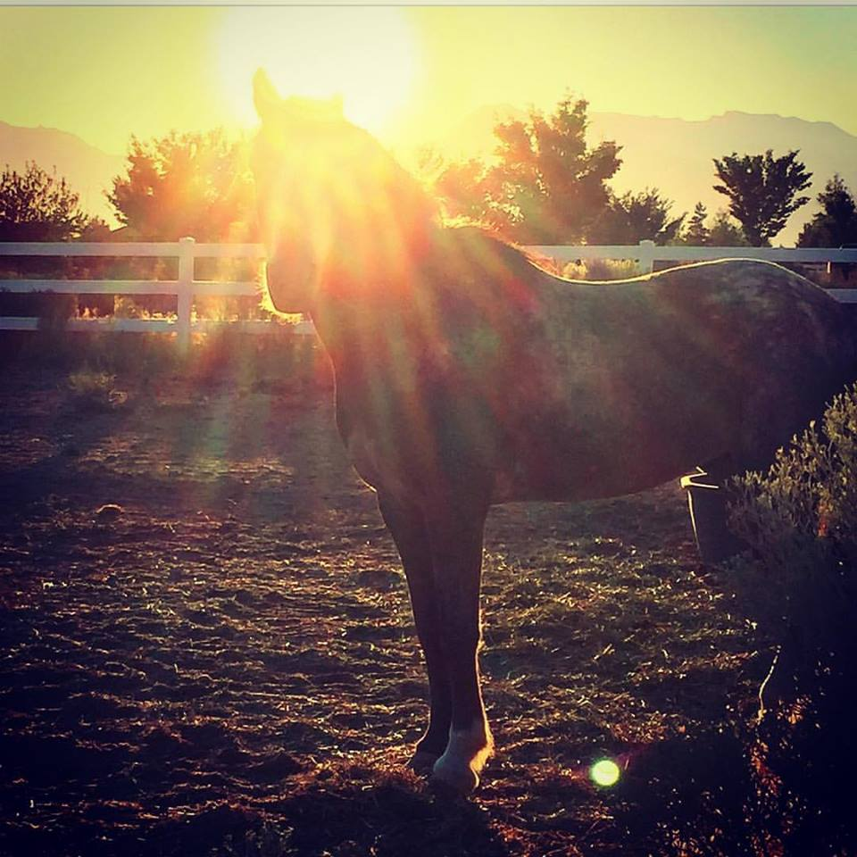 EME Gallery Horse shot.jpg