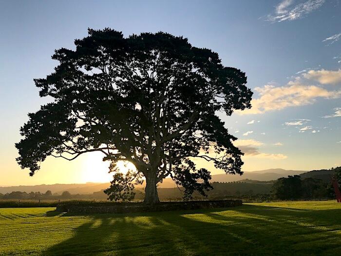 Outside-fig-tree-700.jpeg