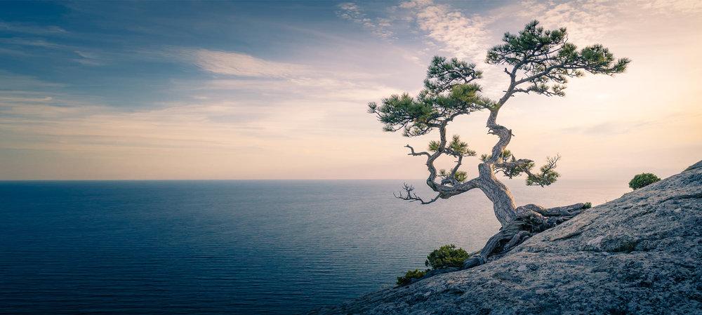 karen dobkins - mindfulness