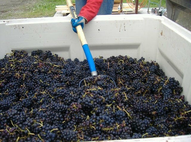 Grapes harvested from our vineyards