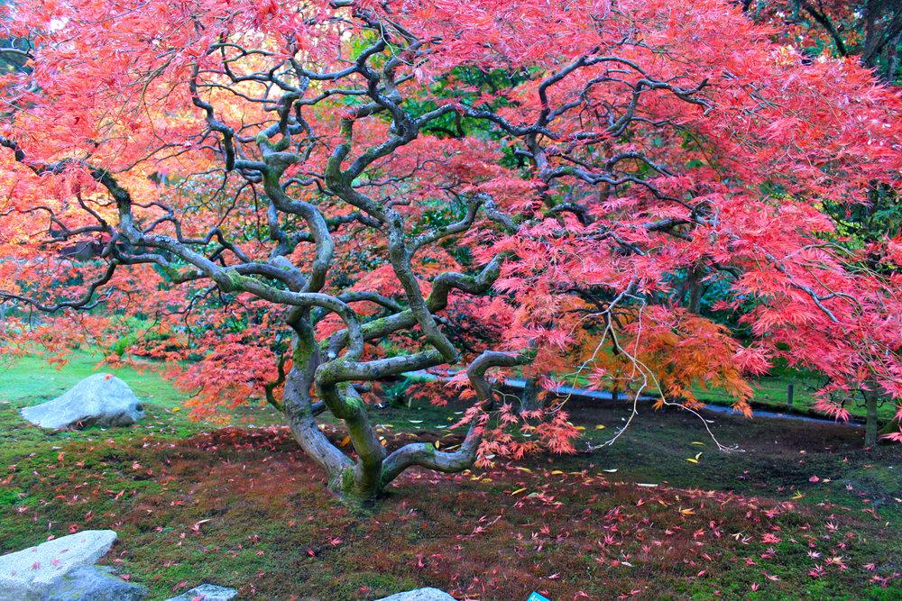 Japanese Garden 3.jpg
