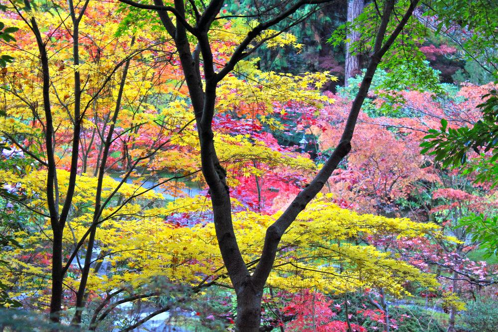 Japanese Garden 4.jpg
