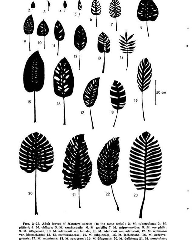 Happy fall forward day ! Leaf details via @_strangeplantlady #plants #happiness #plantprints #nature #green #plantlife #leaves #sachilosangeles