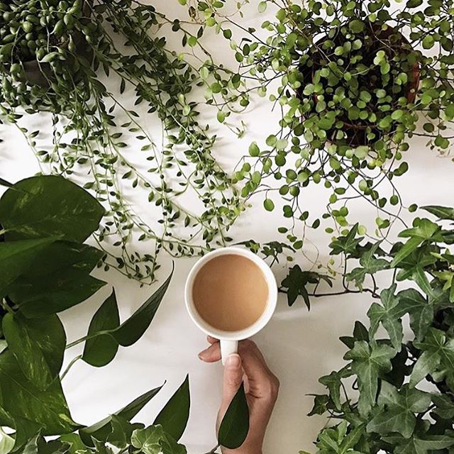 Starting the morning strong with inspiration from @thistle.harvest 🌿🌱🌿 #goodmorning #coffee #plants