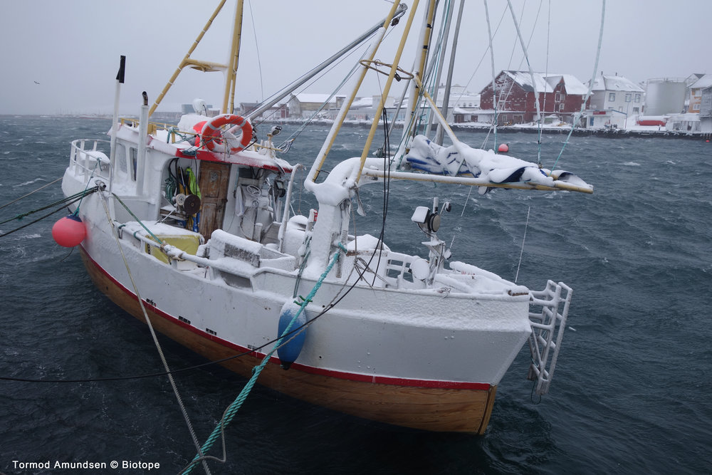 Vardø is primarily a fishing community. Fishing is the main business in Vardø and although the coastal fleet in Vardø is small compared to earlier times, the fishing boats that go in and out of Vardø harbour are an intrinsic part of the city.