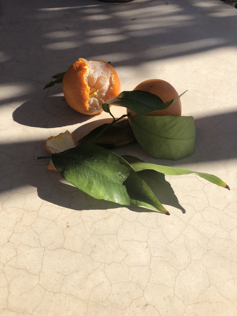 Orangeinsunlight.jpg