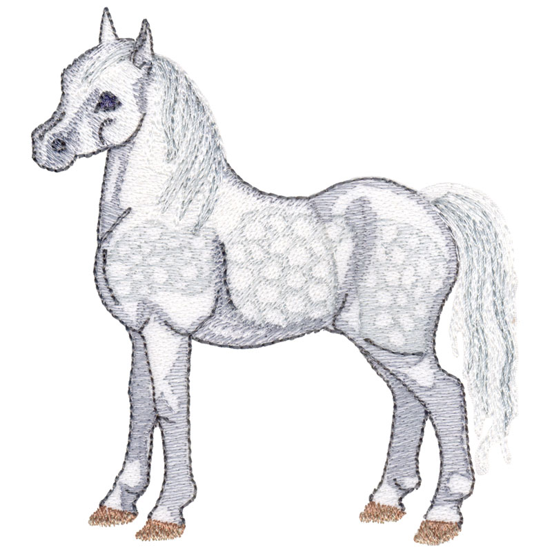 PL19 Welsh Mountain Pony