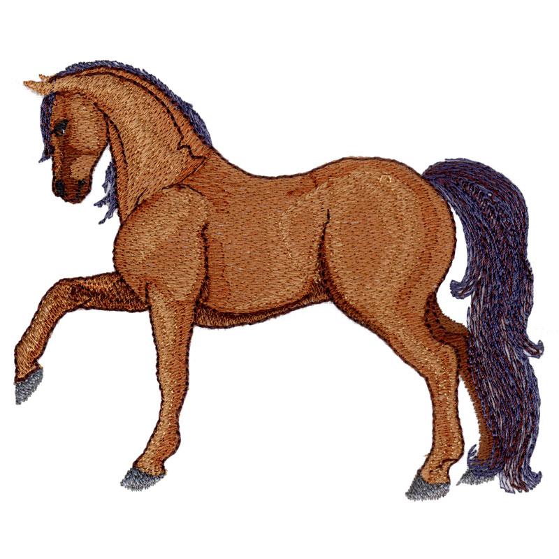 PL22 Morgan Horse
