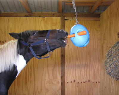 carrot_ball_stable_theprintlocker.jpg