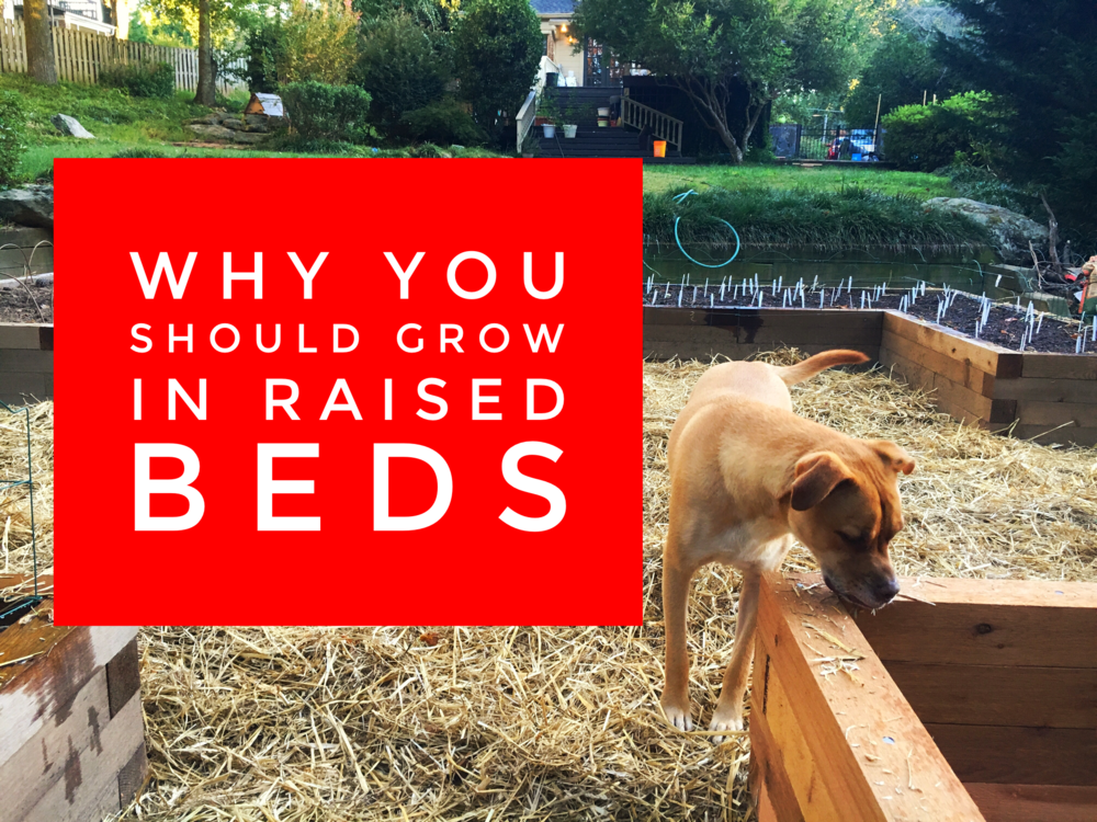 Why you should grow in raised beds