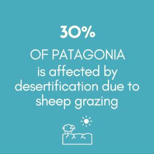 30% patagonia..png