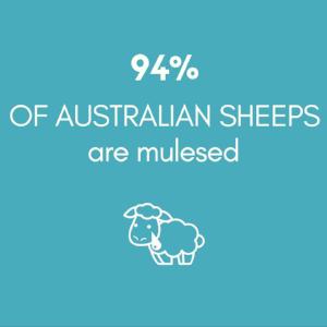 Copy of 94% australian sheeps..png