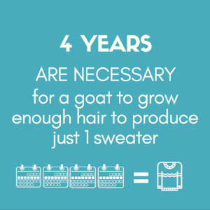 4 years 1 sweater..png