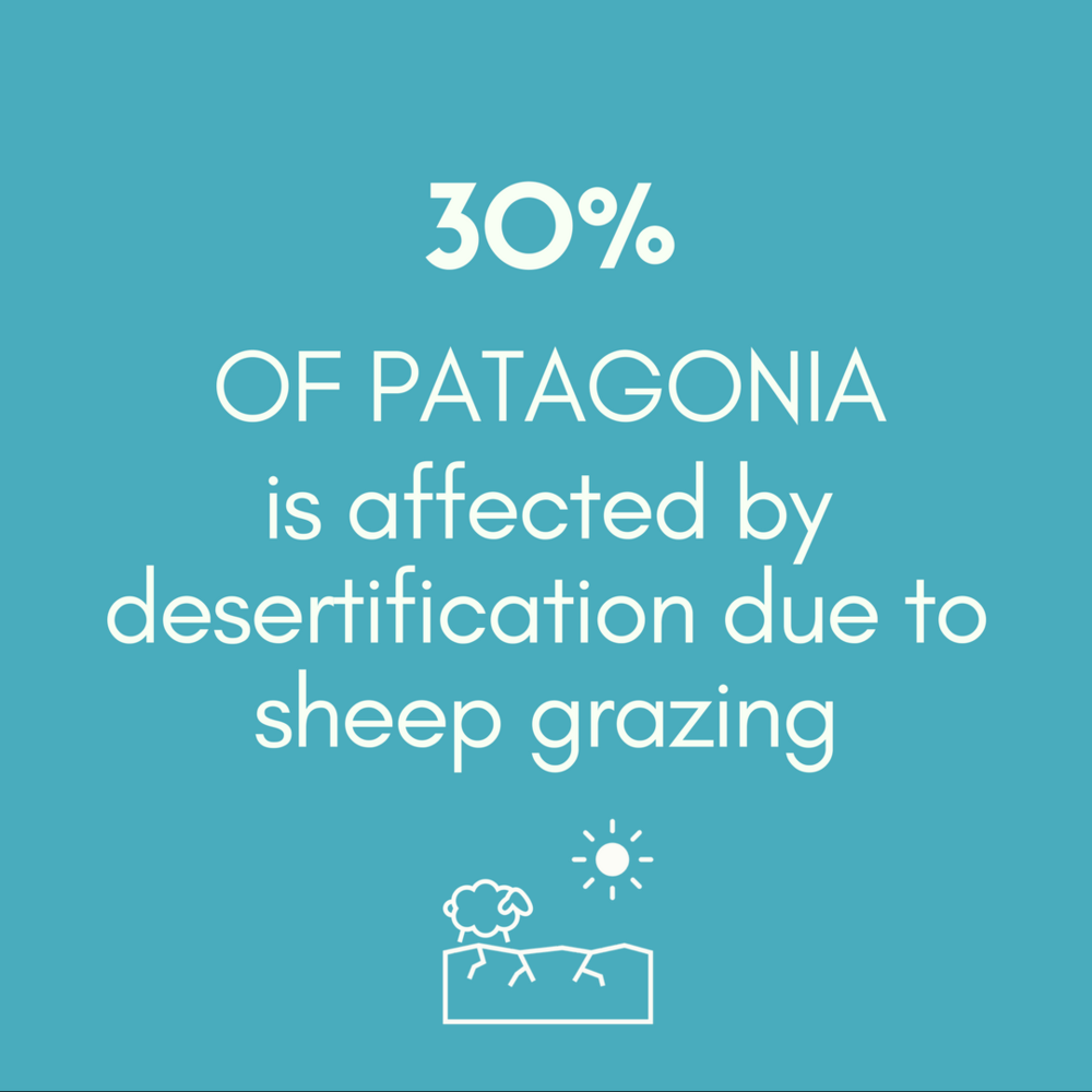 30% OF PATAGONIA is affected by desertification due to sheep grazing