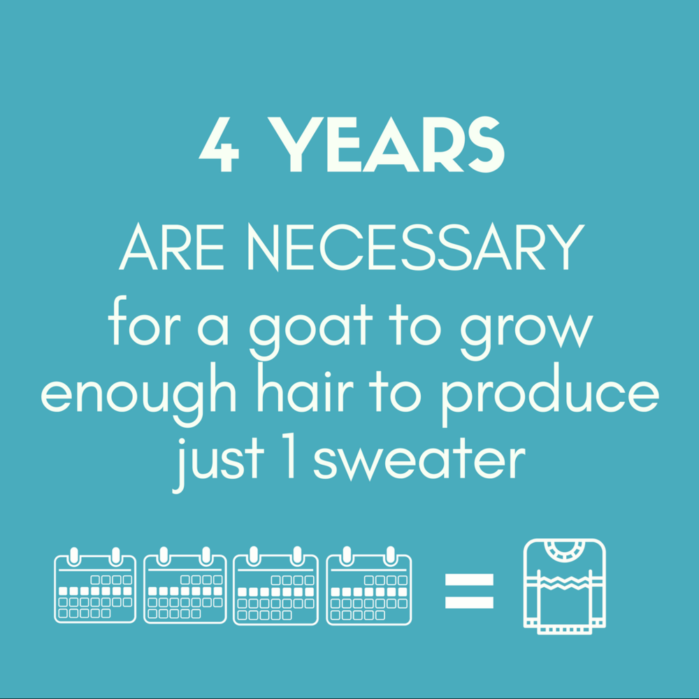 4 YEARS ARE NECESSARY for a goat to grow enough hair to produce just 1 sweater